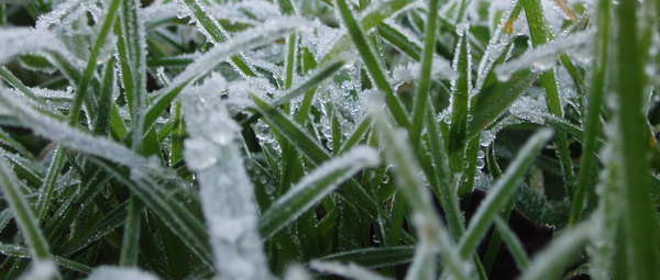 Information About Winterizing Your Lawn