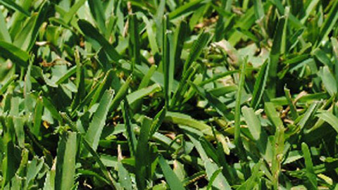 Fertilize Your Lawn